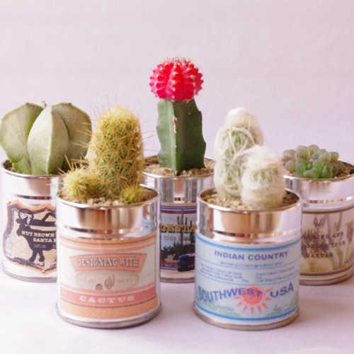 サボテンミサイル サボミサ缶 サボテンと多肉植物のミニ観葉植物 5個セット