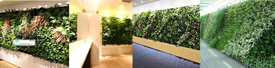 壁面緑化の導入で、ヒートアイランド対策も