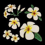 ほつま高蒔絵 花・植物 プルメリア 618