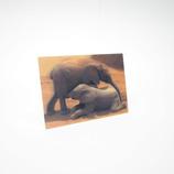 3Dポストカード 象の親子 CS010 ドイツ製