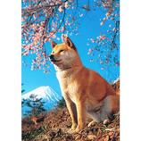 ピンナップ ポストカード 柴犬 富士山 MW27