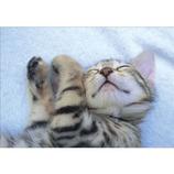 ピンナップ ポストカード 子猫 寝る 水色 AM125