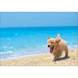 ピンナップ ポストカード AM146 犬 白浜 海│カード・ポストカード ポストカード(写真)