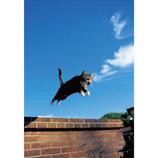 ピンナップ ポストカード 猫 ジャンプ MW95│カード・ポストカード ポストカード(写真)