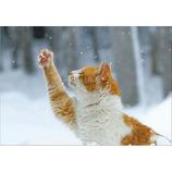 ピンナップ ポストカード 猫 雪つかむ MW96