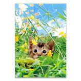 ピンナップ ポストカード 猫 花畑 AM164