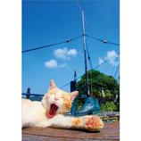 ピンナップ ポストカード 猫 大あくび くつ AM171