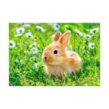 ピンナップ ウサギ アップ 春 AM191│カード・ポストカード グリーティングカード