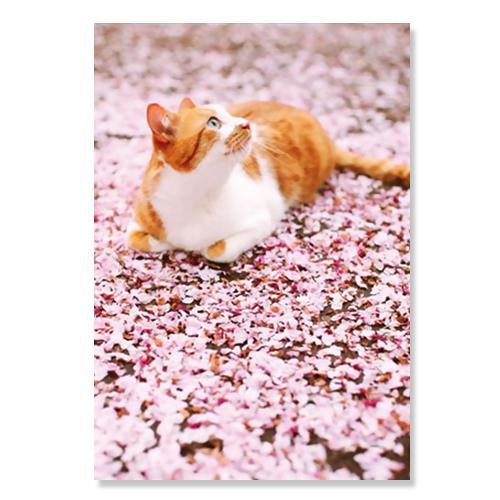 ピンナップ ポストカード 桜 花びら 猫 AM200