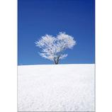 ピンナップ ポストカード 四季彩の丘 ハートの木 NP586