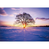 ピンナップ ポストカード ハルニレの木 雪 NP592