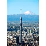ピンナップ ポストカード スカイツリー 富士山縦 TY204