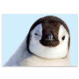 ピンナップ ポストカード ペンギン ウインク AM231