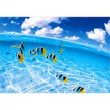 ピンナップ ポストカード LP549 黄色い熱帯魚│カード・ポストカード ポストカード(写真)