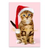 【クリスマス】 ピンナップ ポストカード トラ猫 サンタ MC187