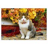 ピンナップ ポストカード 猫と花 MW99
