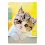ピンナップ ポストカード 子猫 ナニ? AM247│カード・ポストカード ポストカード(写真)