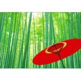 ピンナップ ポストカード NN108 竹林 和傘