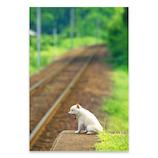 ピンナップ ポストカード 柴犬 白 あくび AM251│カード・ポストカード ポストカード(写真)