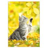 ピンナップ ポストカード 猫と黄葉 AK20