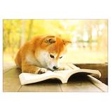 ピンナップ ポストカード 犬 読書 AK22