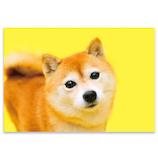 ピンナップ ポストカード 柴犬 えっ AM261│カード・ポストカード ポストカード(写真)