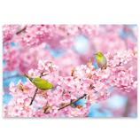 ピンナップ ポストカード 桜 メジロ2羽 桜 HA613