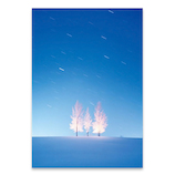 ピンナップ ポストカード 北海道 美瑛 樹氷 降る星 FU23│カード・ポストカード ポストカード(写真)