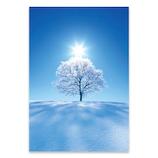 ピンナップ ポストカード 北海道 美瑛 樹氷 太陽 FU24