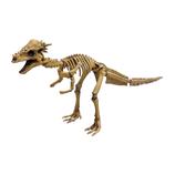 <東急ハンズ> 関節が動く!遊べるアクションフィギュアです。 ポーズスケルトン 恐竜 パキケファロサウルス画像
