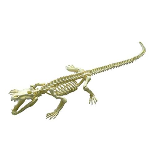 ポーズスケルトン 爬虫類両生類 クロコダイル
