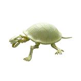 ポーズスケルトン 爬虫類両生類 ゾウガメ