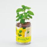 育てるグリーンペットハーブ レモンバーム