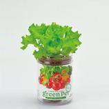 育てるグリーンペットベジ レタス