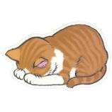 アーティミス(ARTEMIS) ごめん寝マウスパッド 茶トラ