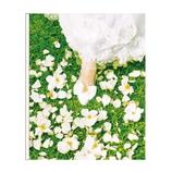 ORANGE AIRLINES スクラップフリーアルバム M AL189