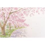 サンリオ 桜並木と石畳 425079