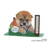 サンリオ 温度計付き暑がる柴犬 723479│カード・ポストカード グリーティングカード