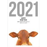 【東急ハンズオリジナル デザインコンペ年賀状】 干支シリーズ 2021年 丑年 年賀状 ETO-007