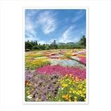 いろは出版 PASPOL 日本の絶景ポストカード 春 JPC-76 くじゅう花公園