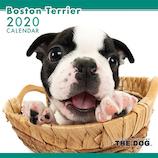 【2020年版・壁掛け】THE DOG ボストンテリア 403306