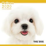 【2020年版・壁掛け】THE DOG マルチーズ 403319