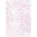 サンリオ ピンク紫ぼかし地にしだれ桜 202622