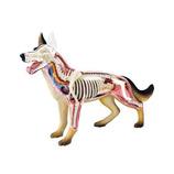 アオシマ 4Dパズル 動物解剖モデル No.18 犬