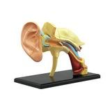 アオシマ 立体パズル 人体解剖モデル 耳 No.7