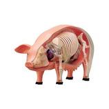アオシマ 立体パズル 動物解剖モデル 豚 №1