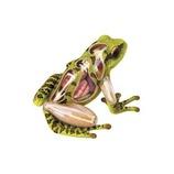 アオシマ 立体パズル 動物解剖モデル カエル №5