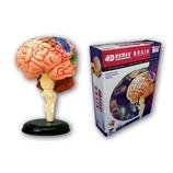 青島文化教材社 FAME MASTER 4D VISION 人体解剖モデル 立体パズル No.12 脳