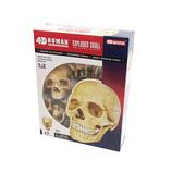 青島文化教材社 FAME MASTER 4D VISION 人体解剖モデル 立体パズル No.23 頭蓋骨