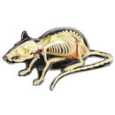 青島文化教材社 FAME MASTER 4D VISION 動物解剖モデル 立体パズル No.14 ネズミ解剖スケルトン